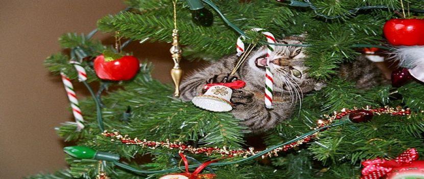 قطط تساعد فى تزيين شجرة الكريسماس
