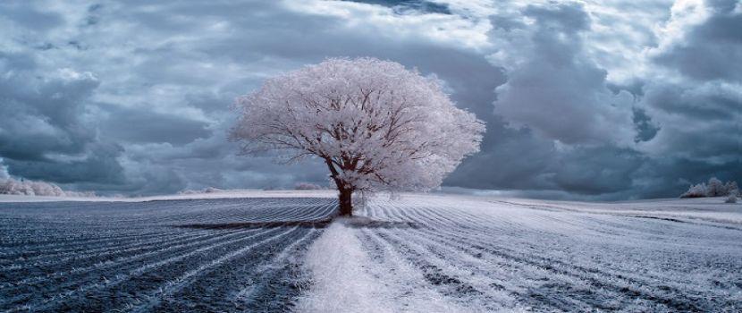 روعة جمال الاشجار فى بولندا